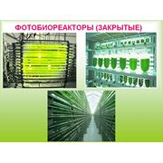 ФОТОБИОРЕАКТОРЫ закрытые для выращивания Хлореллы фото