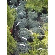 Деревья, кустарники, лианы, травянистые и цветущие многолетники однолетники фото