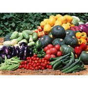 Семена овощей и цветов фото