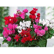 Цветы рассада и удобрения цветы в вазонах