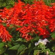 Рассада однолетних цветов фото