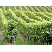 Опоры для винограда фото