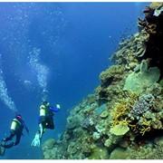 Обследование и очистка дна акватории, в том числе и пляжей фото