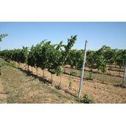 Анкеры для садов и виноградников фото