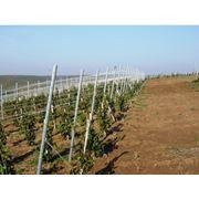 Шпалеры для винограда фото
