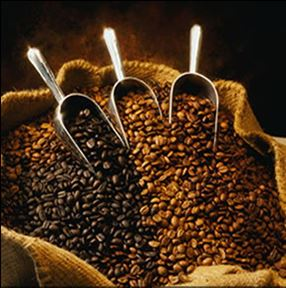 Coffea arabica seed powder