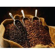Элитный кофе в зернах фото