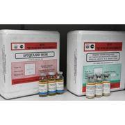 Вакцина против бруцеллеза из слабоагглютиногенного штамма бруцелла абортус № 82 живая сухая ТУ 9384-016—00482915-01 фото