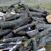 Удаление старых, сухих деревьев в саду фото