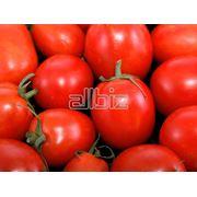 Помидоры томаты свежие фото