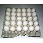 Яйцо куриное С1 лоток 30шт. фото