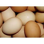 Яйцо куриное пищевое столовое фото