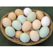 Яйцо Желток солнца фото