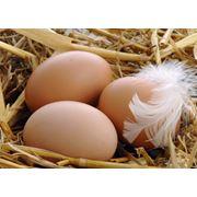 Яйца утиные фото