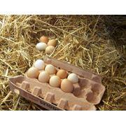Яйцо деревенское фото