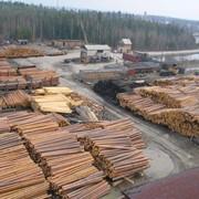 Оформление документов на экспорт леса - дуб, бук, ель, сосна фото