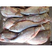 Рыба охлажденная оптом! фото