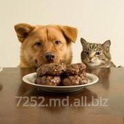 Лакомства для животных фото