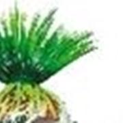 Растение пластмассовое Тритон 8 см фото