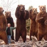 Охота на Камчатского медведя фото