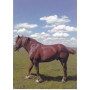 Лошади всех возростов фото