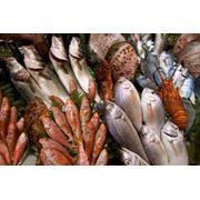 или, как оптовая продажа рыбы в волгограде отличается особой… Посмотреть