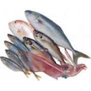 Морская рыба фото