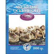 Молодые осьминоги фото
