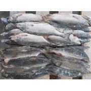 Свежемороженая рыба фото