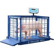 Весы платформенные для взвешивания животных серии ВСП4-60АЖСО фото