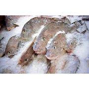 Замороженная рыба фото
