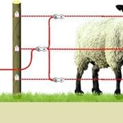 Электропастух для содержания животных фото