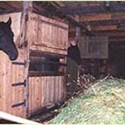Постой для лошадей фото