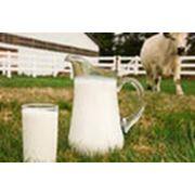Коровье молоко фото
