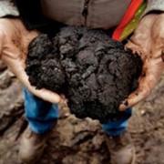 Нефтеносные пески