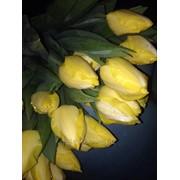 фото предложения ID 17256701