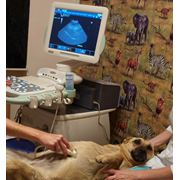 Техника для ветеринарных клиник фото