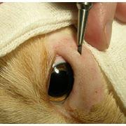 Инструмент ветеринарный фото