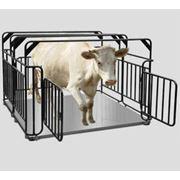 Весы электронные для взешивания скота фото