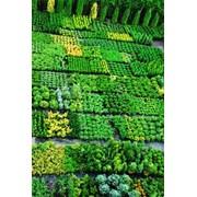 Продажа растений фото