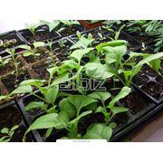 Химическая защита растений фото