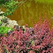 Обустройство водоемов и ручьев №3 фото