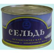 Консервы Сельдь атлантическая натуральная с добавлением масла фото