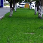 Создание газонов фото