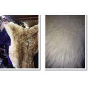 Шкуры овечьи фото
