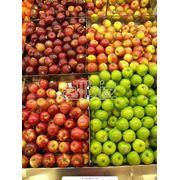 Сельское хозяйство. Плодоовощные культуры. Яблоки. Яблоки зимние. фото
