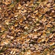 Скорлупа кедрового ореха фото