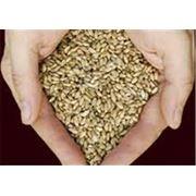Семена для полеводства фото