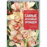 Самые красивые орхидеи фото