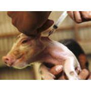 Вакцины применяемые животным разных видов
